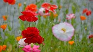 Field Meadow Nature Pink Flower Red Flower Spring 2048x1362 wallpaper