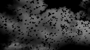 Crow Birds Nature Silhouette Flying Clouds 2048x1152 Wallpaper