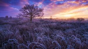 Earth Field Frost Sunset Tree Winter 1920x1280 Wallpaper