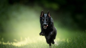 Dog Pet Depth Of Field Sunny 2048x1218 wallpaper