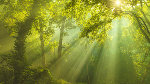 Forest Greenery Nature Sunbeam 6016x4016 Wallpaper