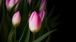 Earth Tulip 3840x2400 Wallpaper
