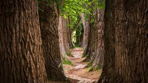 Landscape Nature Trees Walkway Path Outdoors 2822x1940 Wallpaper