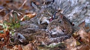 Outdoors Nature Animals Cats Mammals 2048x1365 Wallpaper