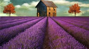 House Lavender Painting Purple Tree 1920x1200 wallpaper