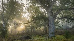 Outdoors Nature Trees Plants Sunlight 3840x2160 Wallpaper