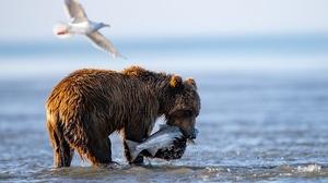 Baby Animal Bear Cub Wildlife 4096x2731 Wallpaper