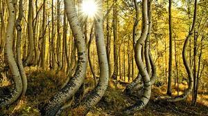 Fall Forest Nature Sunbeam Trunk 2048x1365 Wallpaper