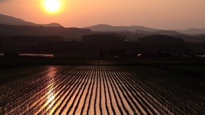 Photography Landscape Nature Field Sunset Rice Paddy 2559x1571 Wallpaper