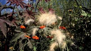 Fall Flower Garden Garden Plants 1620x1080 Wallpaper