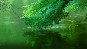 Animation Nature Leaves Water 1920x1080 wallpaper