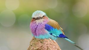 Bird Bokeh Macro Stare Wildlife 2048x1367 Wallpaper