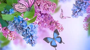 Flower Spring Lilac Blue Flower Pink Flower Butterfly 4350x3196 Wallpaper