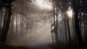 Fall Fog Forest Road Sunbeam Trunk 3840x2160 Wallpaper