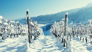 Panorama Snow Vineyard Winter 1280x1024 Wallpaper