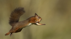 Squirrel Rodent Wildlife Animal Jump 2048x1212 Wallpaper