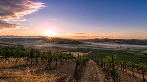 Landscape Sky Sunrise Vineyard 4076x2420 Wallpaper