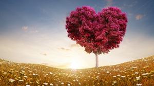 Field Heart Heart Shaped Love Tree 3840x2160 Wallpaper
