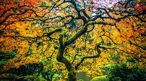 Fall Foliage Nature Tree 2048x1365 Wallpaper