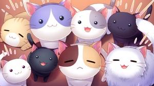 Cat Cute Smile Stare 2048x1152 Wallpaper