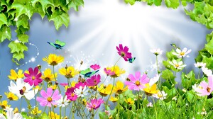 Artistic Butterfly Colorful Cosmos Flower Grass Leaf Spring 1920x1080 Wallpaper
