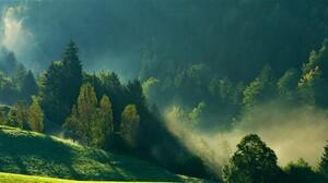 Tree Green Fog 2560x1327 wallpaper