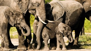 Animal Elephant 3840x2160 Wallpaper