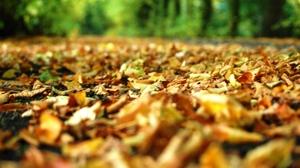 Leaf Nature Fall 2256x1496 wallpaper