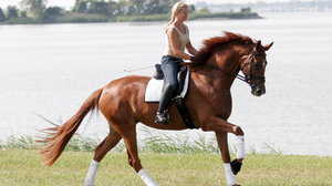 Photography Horse Riding 2857x2119 wallpaper