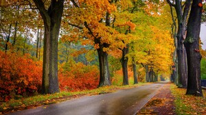 Colorful Fall Foliage Road Tree Tree Lined 1920x1200 Wallpaper