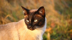 Animal Cat 3840x2160 wallpaper