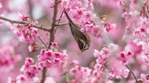 Flower Spring Pink Flower Wildlife 2048x1365 Wallpaper