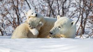 Winter Snow Bear Cub Baby Animal 4096x2731 Wallpaper