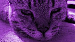 Animal Cat 2560x1440 Wallpaper