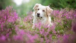 Flower Lavender Pet 2048x1365 wallpaper
