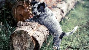 Dog Puppy 2048x1367 Wallpaper