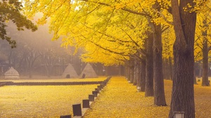 Trees Fall Mist Asia Wood Yellow Leaves Park Fallen Leaves Outdoors 3000x2002 Wallpaper