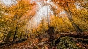 Fall Foliage Forest Nature Sunbeam 2560x1707 Wallpaper