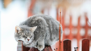 Cat Cute Depth Of Field Pet Winter 2800x1963 Wallpaper