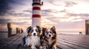 Dog Outdoors Pier Lighthouse Animals Mammals 2000x1334 Wallpaper