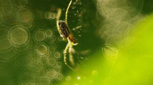 Arachnid Bokeh Macro Spider Spider Web Summer Sunshine 2048x1534 Wallpaper