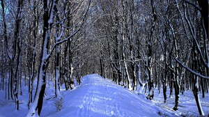 Earth Path Snow Winter 2026x1311 Wallpaper