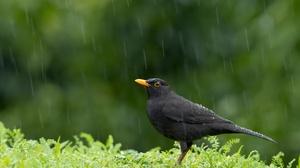 Rain Bird Wildlife 2048x1365 Wallpaper