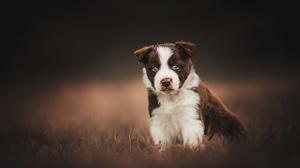 Baby Animal Dog Pet Puppy 2048x1365 Wallpaper
