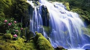 Earth Flower Forest Moss Rock Tree Waterfall 2560x1600 Wallpaper