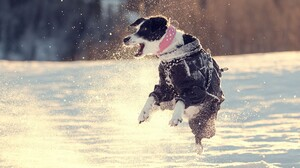 Animal Dog Jump Pet Winter 1920x1080 Wallpaper