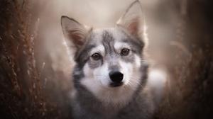 Dog Pet Puppy Baby Animal 2048x1365 Wallpaper