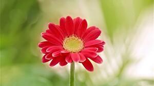 Daisy Earth Flower Gerbera Red Flower 2048x1365 Wallpaper