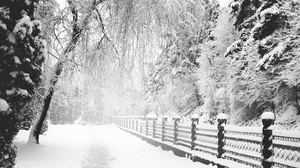 Fence Path Snow Tree White Winter 3648x2736 wallpaper