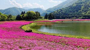 Nature Forest Mountains Trees Lake Pink Flowers Clouds Yamanashi Japan 1920x1080 Wallpaper